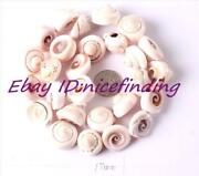 Conch Shell Beads