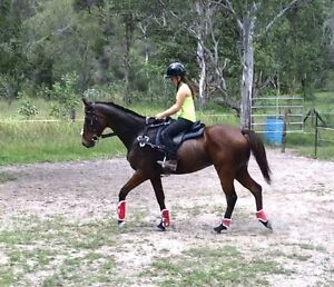 WANTING TO BUY A JUMP SADDLE Logan Village Logan Area Preview