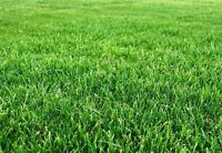 Need your lawn cut? Trimmed and bagged?  Call me