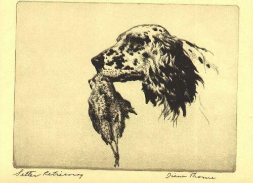 * English Setter - 1935 Vintage Dog Print - Diana Thorne (RARE)