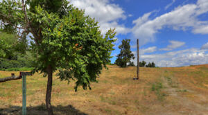 Almost 5 Acres to Build Your Dream Home!