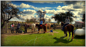 Horse Board, co-board (leasing) or get in some horse time. Kitchener / Waterloo Kitchener Area image 1