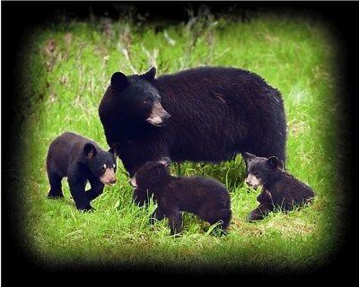 New Mama & Three Black Bear Cubs Fleece Throw Gift Blanket Bears Cabin Decor NIP ()
