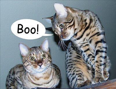 Bengal Cat Fridge Magnet