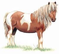 Recherche poney a donner pour les enfants