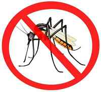 Looking for working partner for Mosquito Business