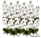 Silk Orchids