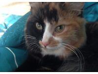 MISSING TORTOISESHELL FEMALE CAT