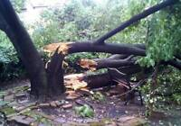 Tree removal and windfall removal