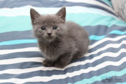 Yoda rescue KITTEN to adopt VET WORK INCLUDED