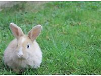 Young little girl rabbit needs a new home PRICE ALL INCLUSIVE-hutch,bedding,hay,toys,food,bowl,water