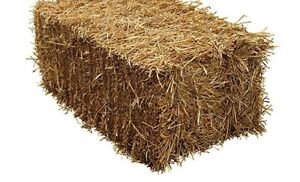 Small Square Bales of Straw for Sale Kitchener / Waterloo Kitchener Area image 1