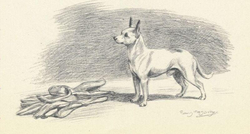 * Chihuahua - Vintage Dog Print - 1942 Megargee