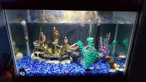 20 Gallon Fish Tank - All Accesories Included