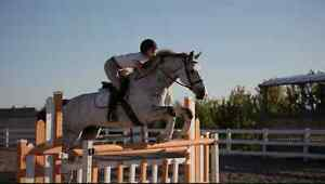 Sunday Winter Schooling at Sky Haven Equestrian Centre Kawartha Lakes Peterborough Area image 3