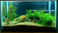 All Aquariums and Unwanted Fish Tanks
