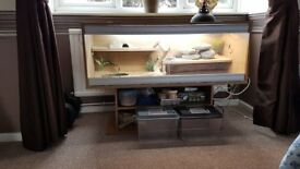 Reptile Viv. package with free Lizard at lees than a quarter of retail price due to moving house.