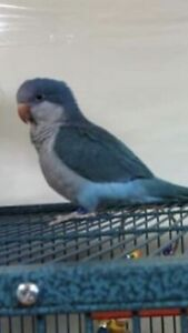 ***LOST BIRD PLEASE HELP****