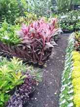 QUALITY PLANTS! Best prices! Springwood Logan Area Preview