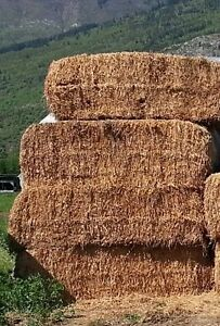 Cow HAY for sale
