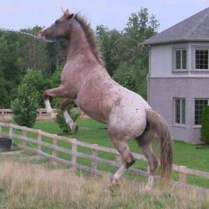 Holistic Equine/Canine Solutions