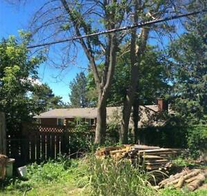 Looking to have 2 big maple trees cut down.FREE FIREWOOD