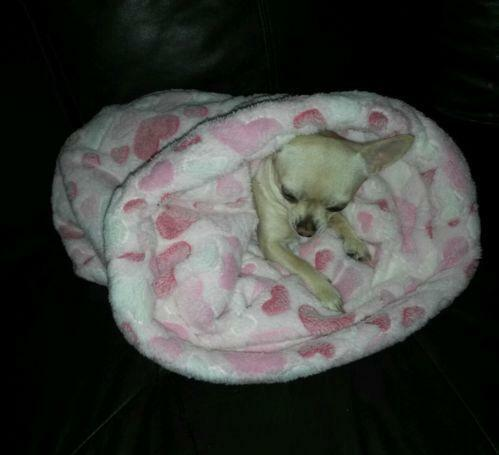 Snuggle Sack Pet Supplies Ebay