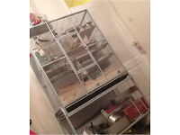 Bird / degu / rat / chinchilla cage