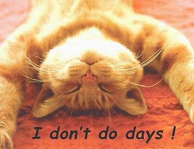 Ginger Cat Fridge Magnet, Don't Do Days!