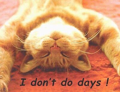 Ginger Cat Fridge Magnet, Don't Do Days!