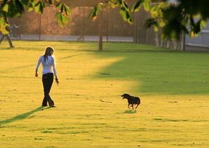 Dog Walking East End (Pickering)