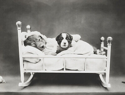 Bedtime - Dog And Puppy In A Cradle - 1914 - Photo - Puppy Posters