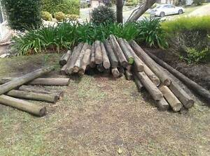 Treated pine logs Bangor Sutherland Area Preview