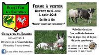 Du coq à l'âne des Laurentides une ferme à visiter