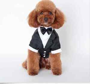 Dog Collared Tuexedo Black & White With Bow Pemulwuy Parramatta Area Preview