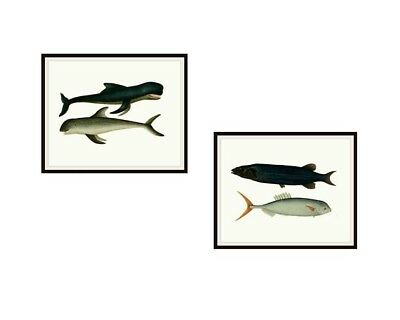 """Set of 2 Vintage Botanical Bookplate Art Print Poster Reproductions """"Giant Fish"""""""