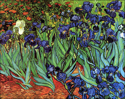 Irises    by Vincent van Gogh   Giclee Canvas Print Reproduction