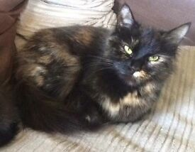 Beautiful tortoise shell cat looking for new forever home