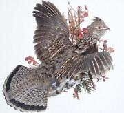 Grouse Taxidermy