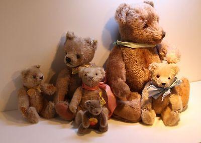 6 alte Steiff Teddys Mohair Knopf Glasaugen verschiedene Größen Teddybär Bären