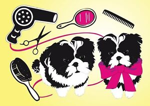 Specializing in Cat and small dog styling