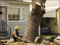 **tree cutting service at low rates**