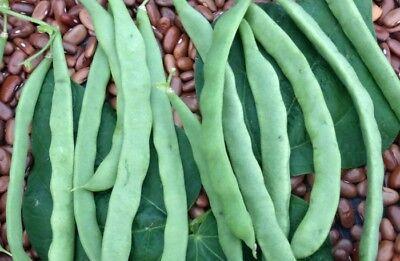 Kentucky Wonder Bean Seed - Heirloom Greenpod Pole Beans Seeds (¼oz to 1 LB) - Kentucky Wonder Beans