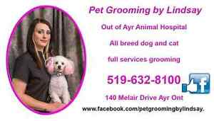 October Grooming specials ! Cambridge Kitchener Area image 1