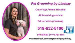 January Special ! Professional dog and cat grooming