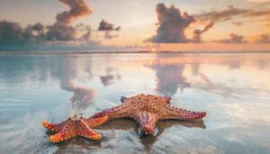 Coloured Seashells And Starfish Basket-Brand NEW