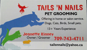 Pet Grooming in Your Home