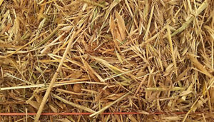 Feed Pea Straw for Sale