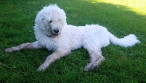 """KLAWS: LOST """"TOSH"""" Cnty Rd 507/Hwy 36, Trent Lakes"""