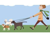 Dog Training & Walking Service. No problem to big or Small! If we can't fix it you don't pay!